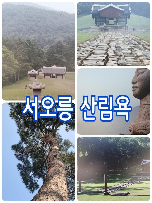 서오릉 산림욕~!